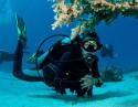 Bautismo de Buceo en Altea ¡Descubre la vida submarina!