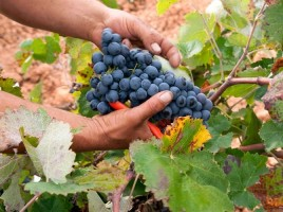 Visita a Bodegas Vegalfaro con Cata de 3 Vinos y 1 Cava