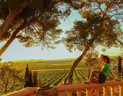Masterclass de Cata en Utiel con Tour a la Bodega Vera de Estenas y sus Viñedos
