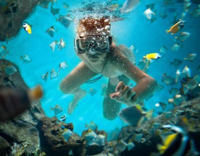 Ruta de Snorkel en Tabarca con biólogos + Visita a la Isla