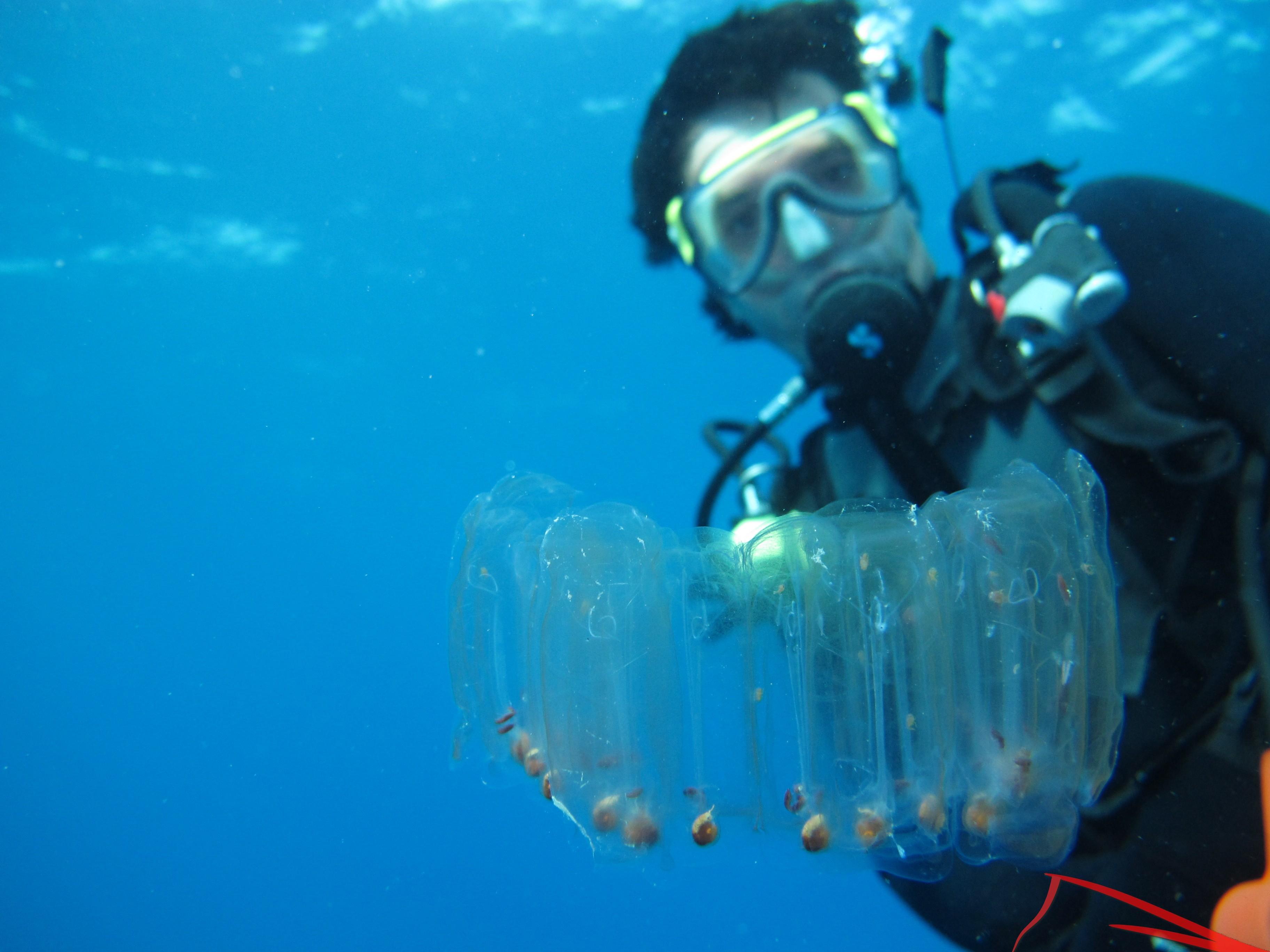 Nisos Diving, Buceo en Benidorm-foto1
